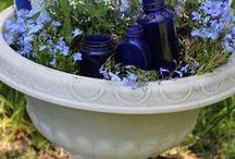 container gardening / by Linda Barton