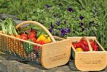 GARDEN  Edibles / Growing Successful Veggies / by Diane Salter