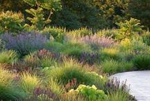 GARDEN Drought Tolerant Landscape / by Diane Salter