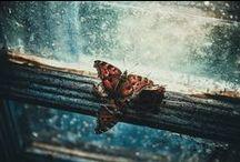 Random Photography / Random Photography