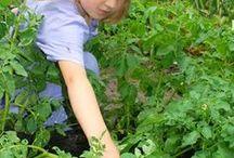 Food garden ideas