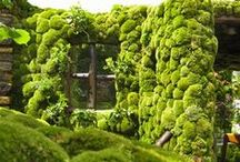Vertical Gardens / by Loisaida Nest