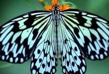 Oh..Look~  Butterfly