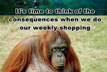 Choose PALM OIL Free / Help prevent Deforestation and Destruction of precious Habitats for Endangered Wildlife / by Sue Pate
