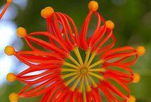 Flowers, Centerpieces & Tables / simple details bring joy  / by Jill Clark