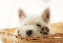 Cutest of the Cute / by Christie Scibior
