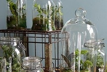 Apothecaries, Cloches and Houseplants, oh my! / Ideas for displays, and hopefully some houseplants that I can manage not to kill... / by Holly Saylor