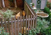 mini homestead / by Kari Ann Ramsey