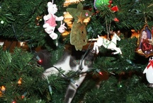 Kitty Love / by Dawn Edwards Taranto