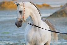 le cheval / by Michelle Buxton-Garcia