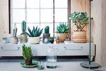 Home Decor / by Megan Arnone