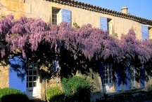 Provence Hotels / by Xiaowei H.