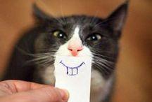 Cute/Silly / Silly, cute, funny... / by Stephanie Americanbyrd