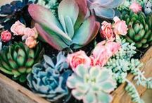 Succulent Obsession / Succulent display ideas including DIY.