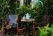 Gardening - Decor and Tips / small gardens, balcony gardens, garden ideas, garden design, garden decor, gardening tips, gardening for beginners, gardening tips