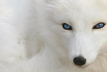 For The Love of Animals / I want one of each!! / by Alyshia Fure