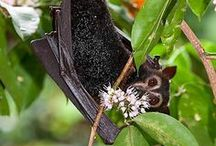 Chiroptera- For the love of Bats / by MadElf Creativeworks