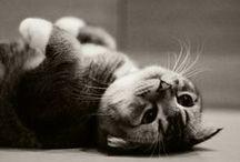 Mininos / No es fácil ganarse el afecto de un gato. Será tu amigo si eres digno de su amistad, pero nunca tu esclavo sumiso (Theophile Gautier)  / by Marien M. Gª