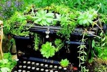 Plantas y Flores / Variedades de la Flora mundial