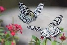 Let's Fly... Birds, Butterflies & Cute Flying Creatures   / ƸӜƷ  ƸӜƷ  ƸӜƷ  Gorgeous Birds, Dazzling Butterflies, Shiny Ladybugs & Glittery Dragonflies from Around the World. ƸӜƷ  ƸӜƷ  ƸӜƷ