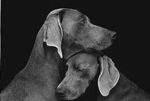 K9 ///+ / DOGS, A MANS BEST FRIEND