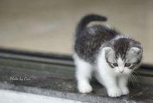 Awww...so cute! / Cute animals