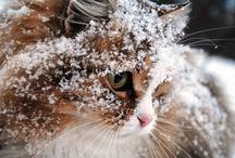 Cats / (=^x^=) / by B. Nova