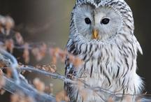 Owls / by V. Nova