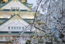 Travel ~ Japan  / by V. Nova