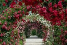 Garden ~ Backyard ~ Greenhouse / by B. Nova