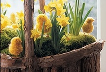 Spring / Easter / I love Easter! Spring is my favourite Season!