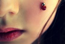 little miss ladybug