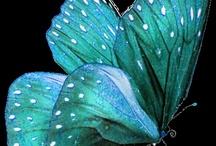 Turquoise / Aqua