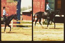 H. Horsemanship&Riding&Horse / Horsemanship&Riding&Horse& horses