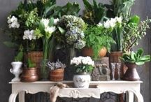Plants indoor / All types & ideas on how to grow them & display. Love all plants & flowers ....