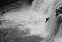 creeks & cliffs  / by Taylor Gautier