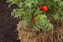love relaxed gardening / I dabble in gardening. I keep it simple and compost too.