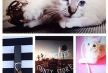 Local Places / by LUXE Paws