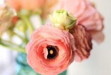 Flowers - for wedding and everyday