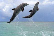 Oceano ><(((*> / Mundo Aquático de extraordinária beleza e seus habitantes.