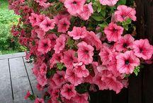 ~ Flora ~ / Encanto e Harmonia