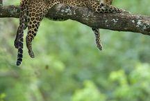 ~ Fauna ~ / Diversidade e exuberância