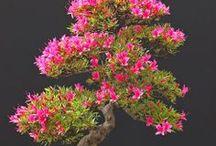 ❤️ Bonsai / Sou ❤️por essas arvorezinhas...Love, love bonsais!