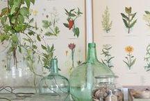 INTERIORS :: Botanical
