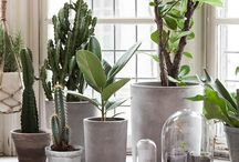 HOME - indoor planting