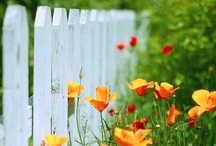 Garden & Landscaping by deeAuvil / everything about gardening including chickens and swimming pools