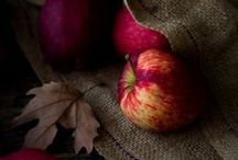 Season - Autumn & Fall by deeAuvil / all the most beautiful autumn and fall season image pins