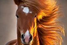 Pony *