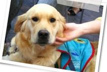 pet news & events
