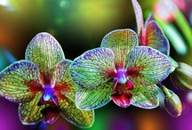 { My Lovely Garden } / by Sarah Mendez